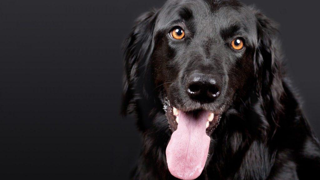 Comment choisir un gilet de protection pour chien de chasse ?